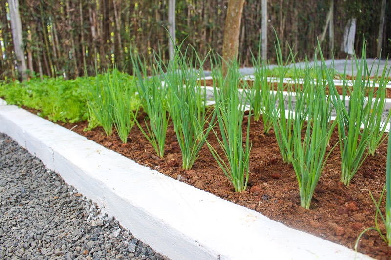 Amado Projeto-piloto do Meio Ambiente cria horta comunitária QH46